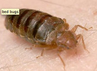 Bed bug alert what to know before you go for Bed bug alert